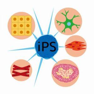 ips細胞の治験開始、再生医療の実用化へ